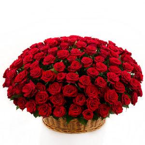 151 красная роза в корзине